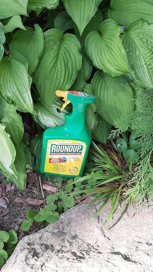 glyfosaatit-puutarhassa