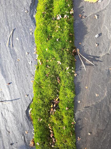 sammaleen-poisto-ympäristöystävällisesti