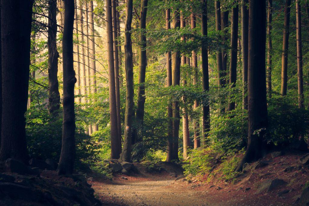ekologinen-puu