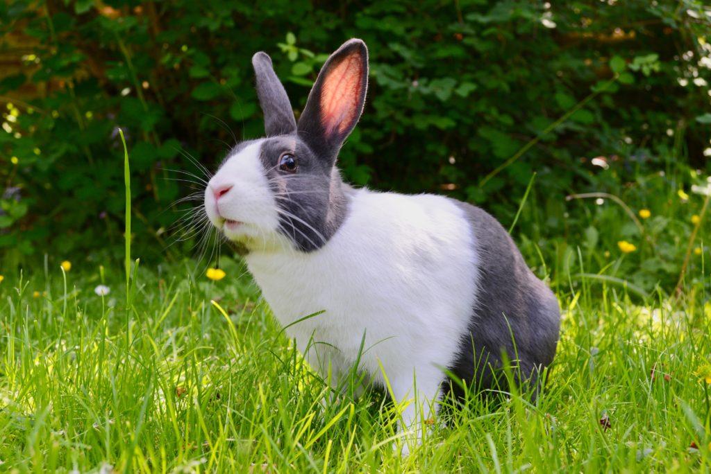 leaping-bunny-sertifikaatti